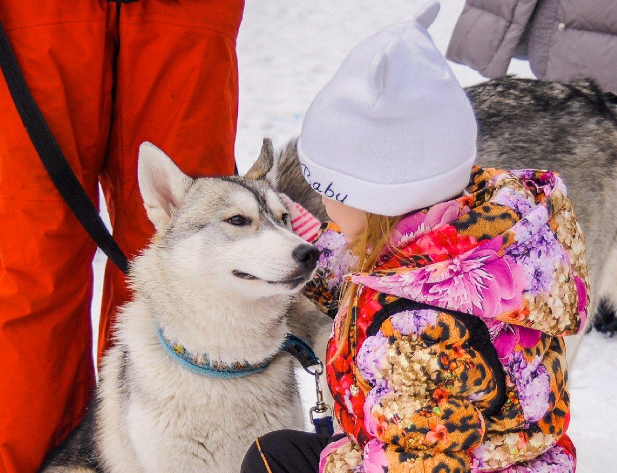 Фестиваль «Камчатка. Хаски. Питер» 2018