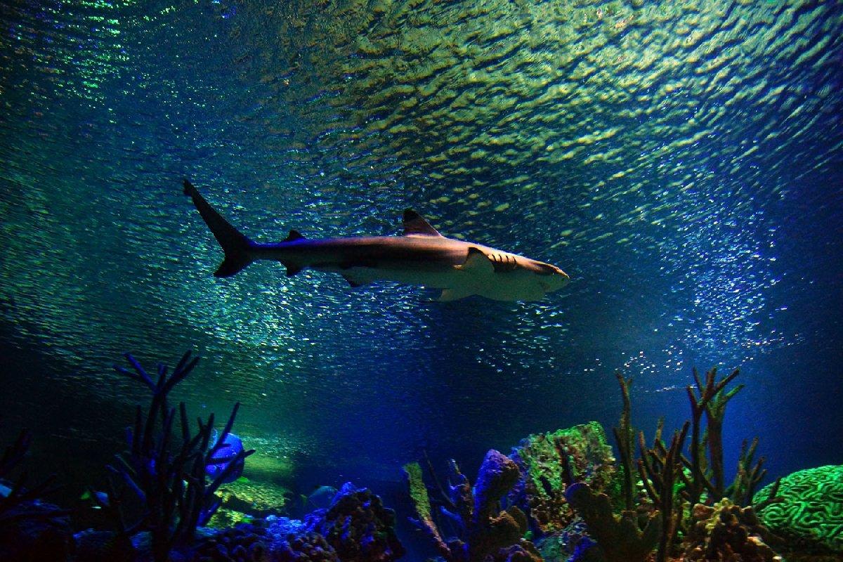 Океанариум в санкт петербурге фотографии