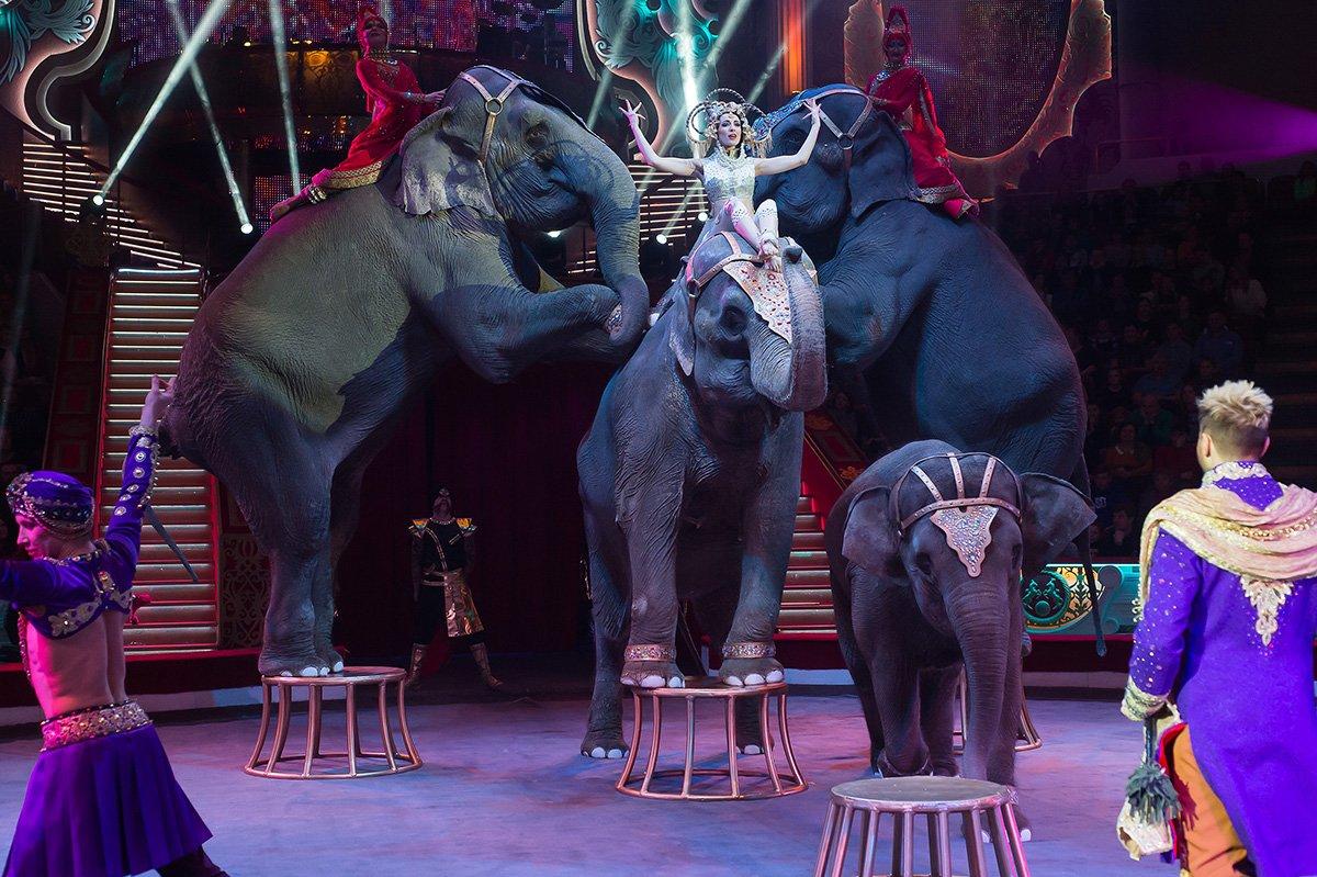 Международный фестиваль циркового искусства «На Фонтанке» 2018