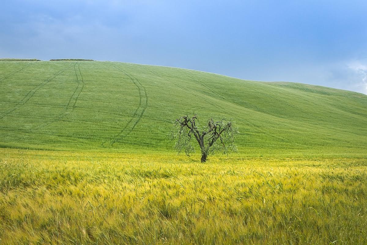 Выставки «Открывая Италию. Базиликата» и«Сны Лукании»