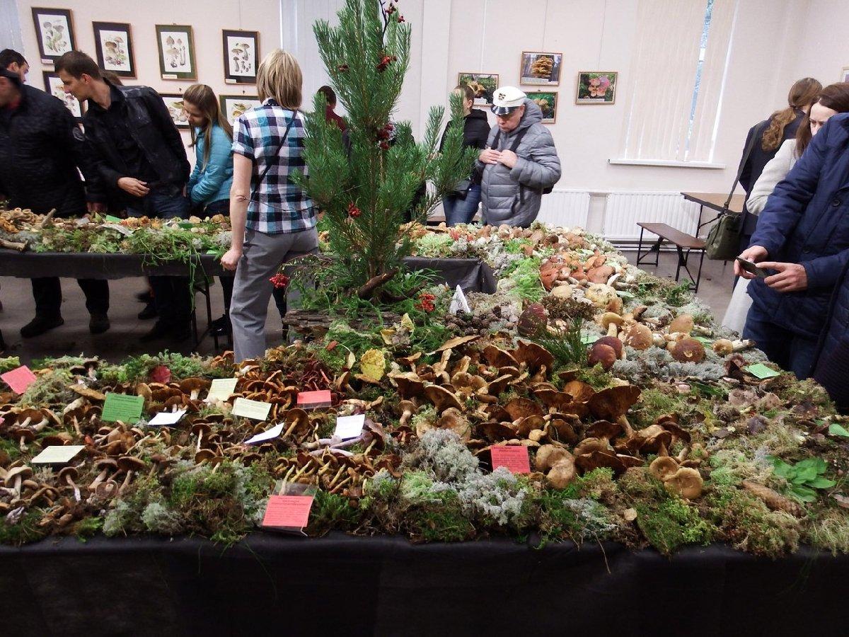 Выставка «Планета грибов»