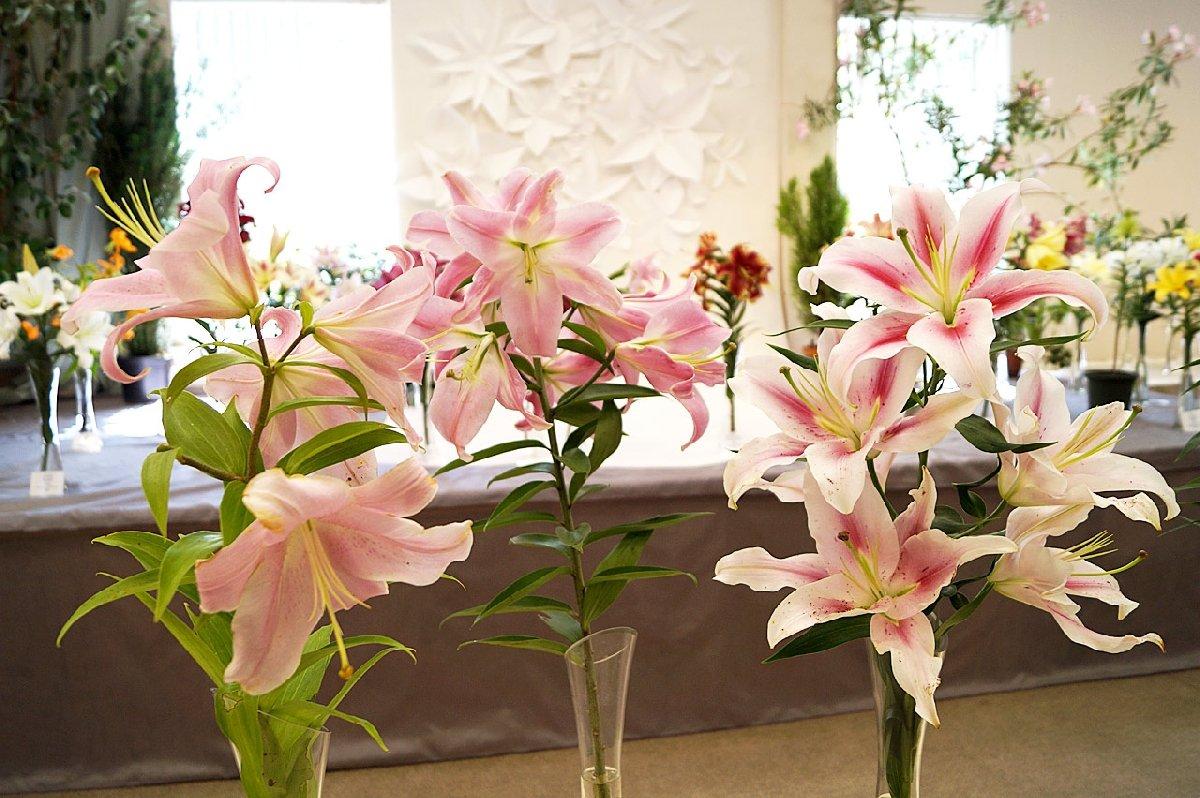 Выставка «Петербургские лилии»