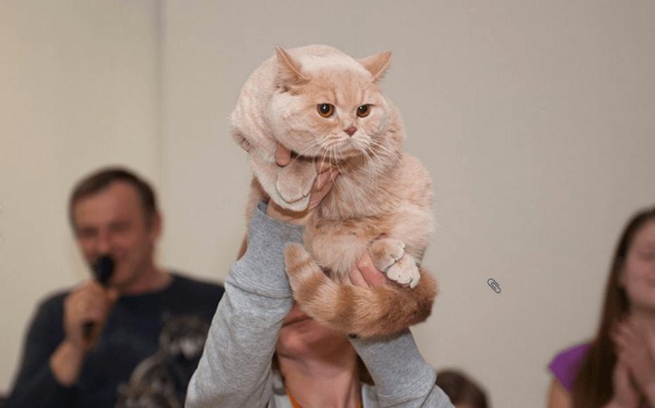 Выставка кошек «В гостях уСАФФИ» 2016