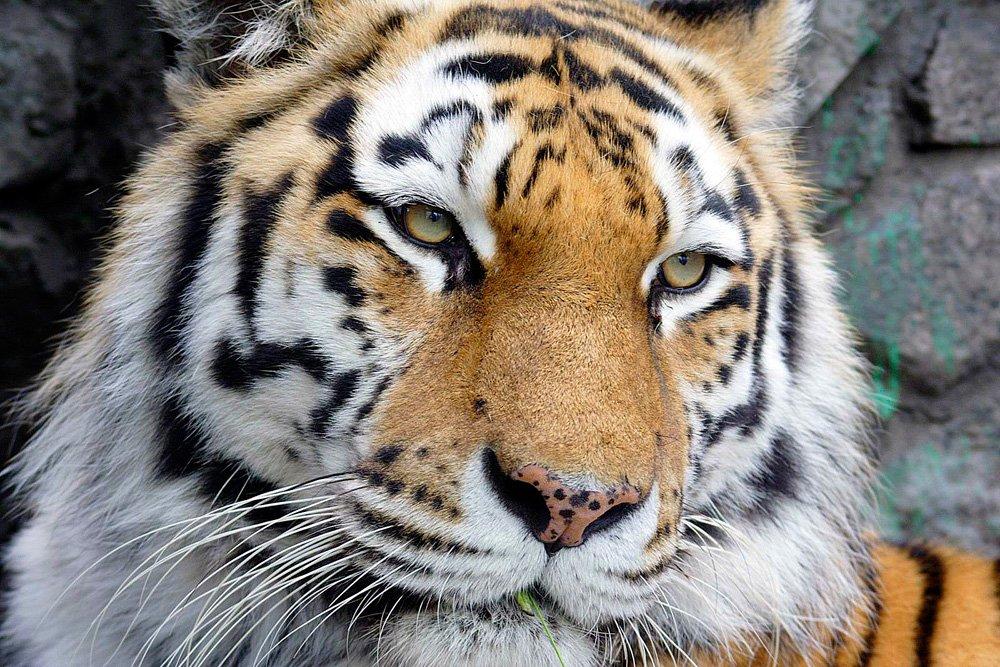 Программа для детей вЛенинградском зоопарке