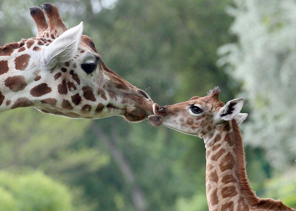 Праздничная программа вЛенинградском зоопарке к8 марта