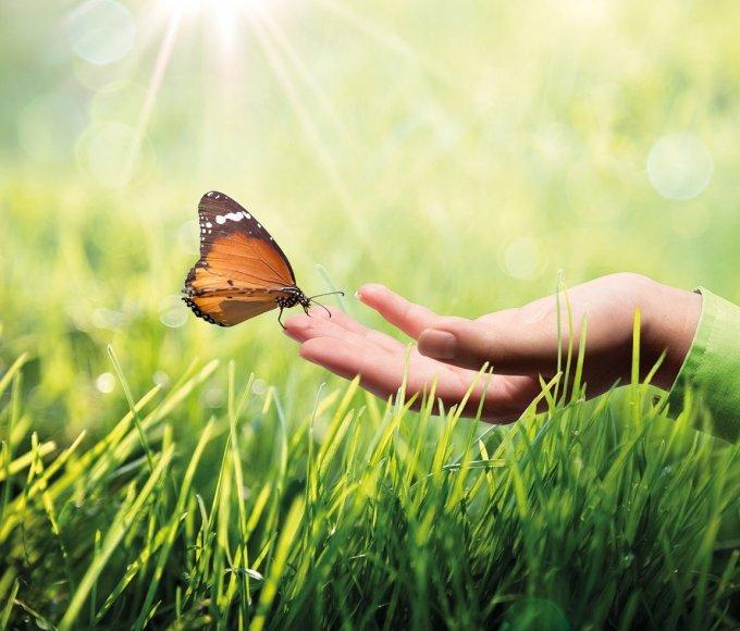 Бабочка и рука картинка