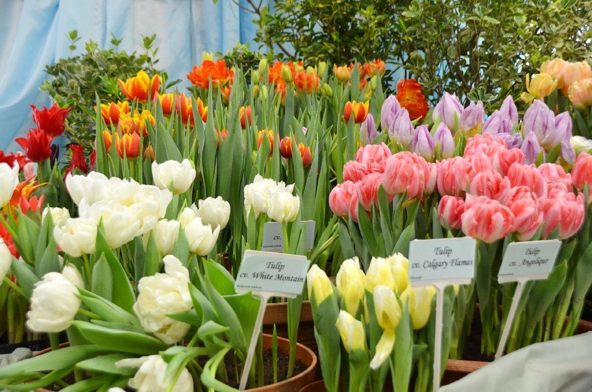 Выставка тюльпанов «Мечты овесне» 2019