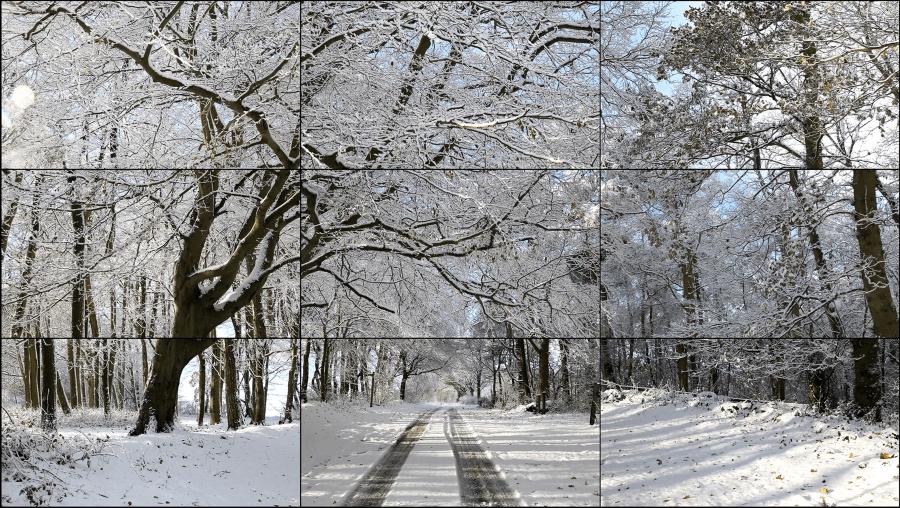 Видео—работа «Уолдгейтский лес, зима, 2010»