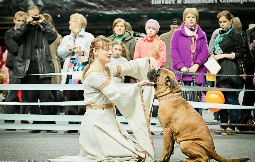 Шоу «Собаки мира»
