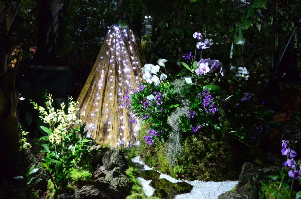 Выставка орхидей «Осколки радуги» вБотаническом саду 2020