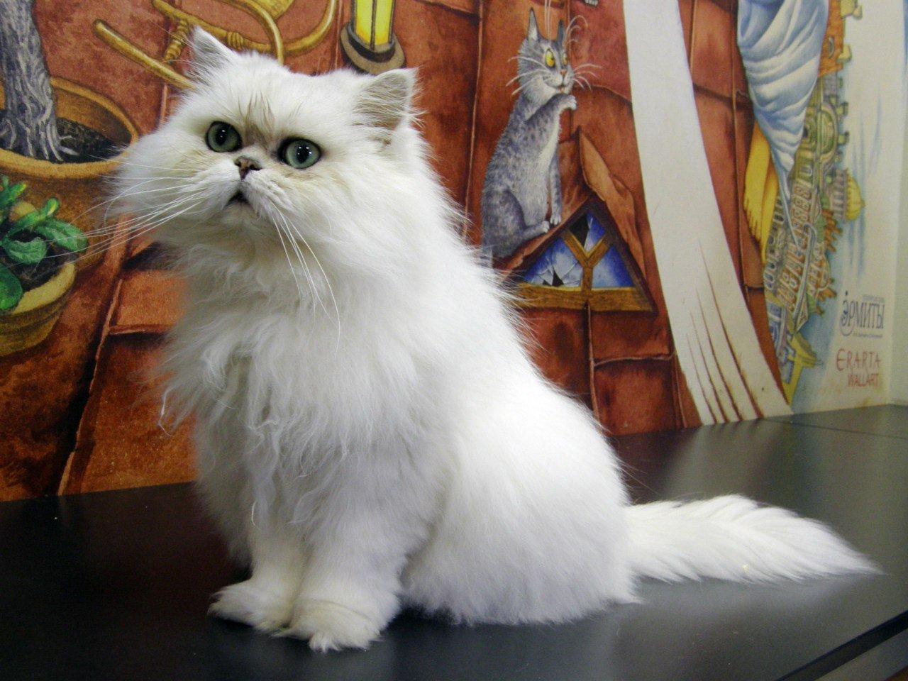 Музей «Республика кошек»