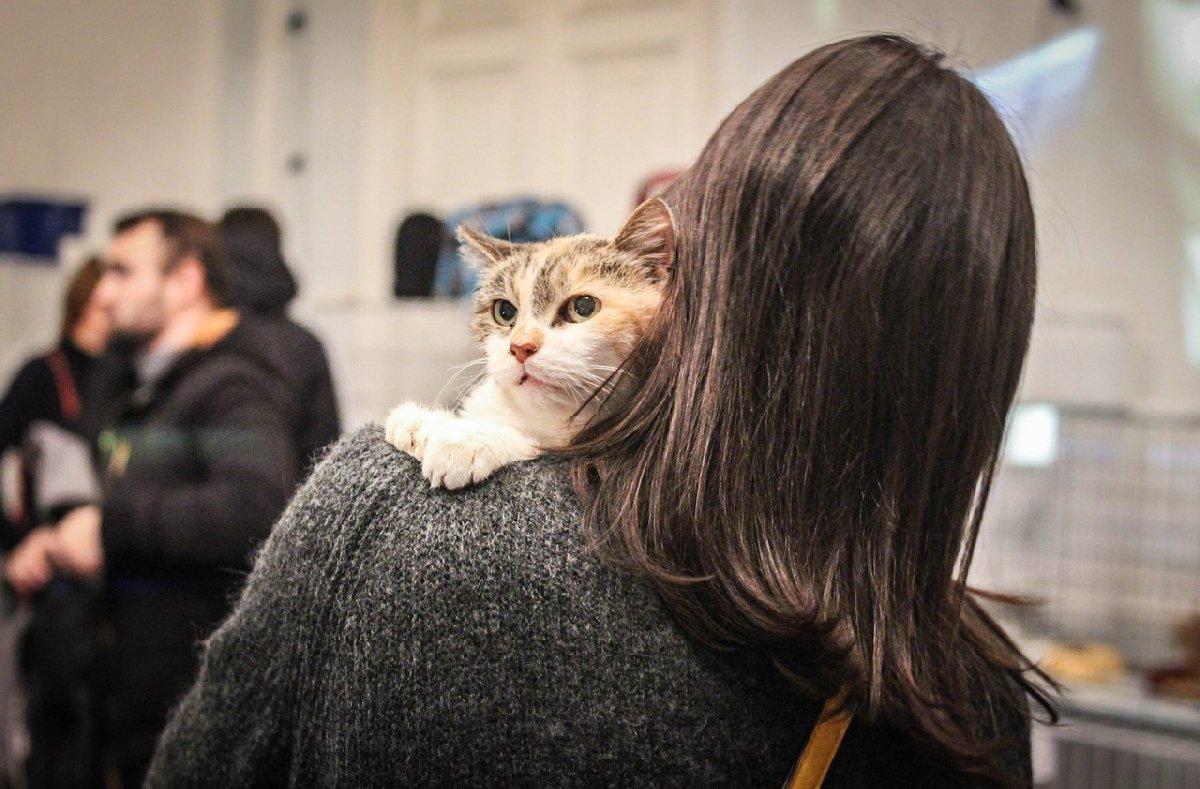 Выставка «Разноцветные коты»
