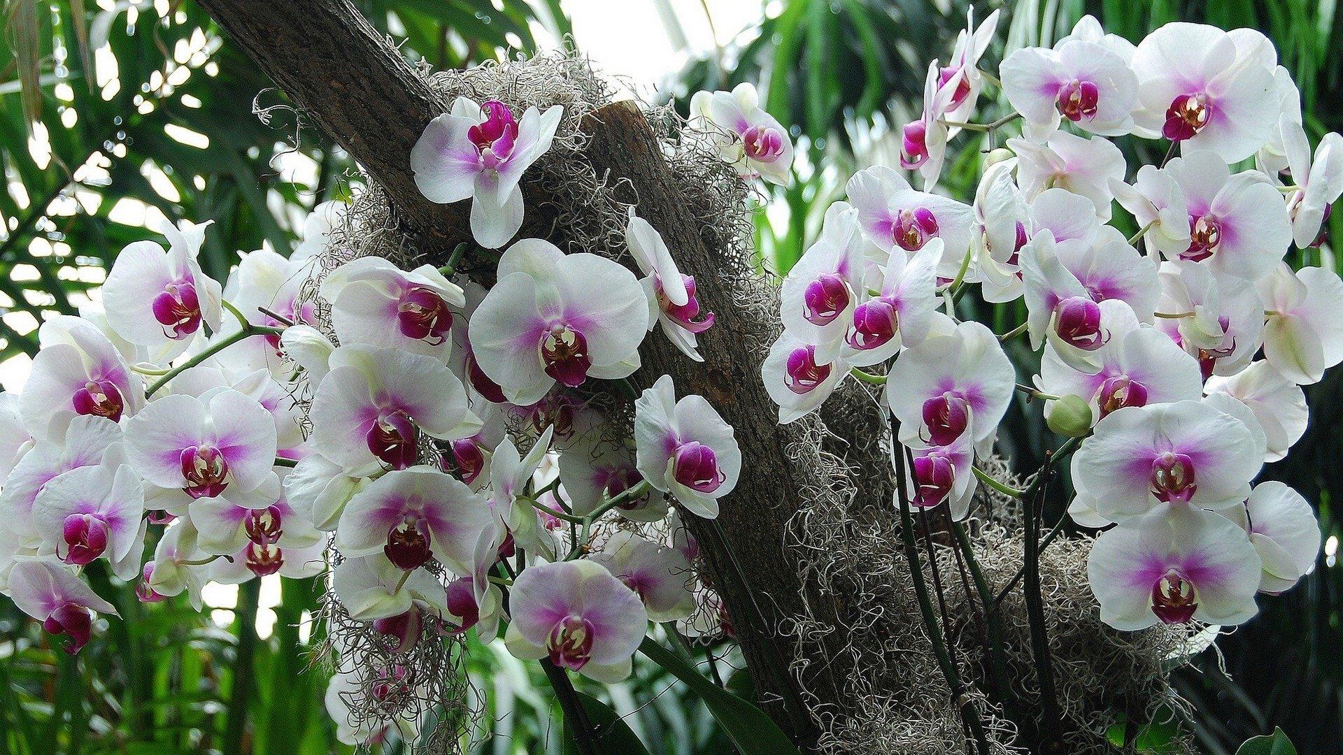 Выставка орхидей вЛенинградском Зоопарке