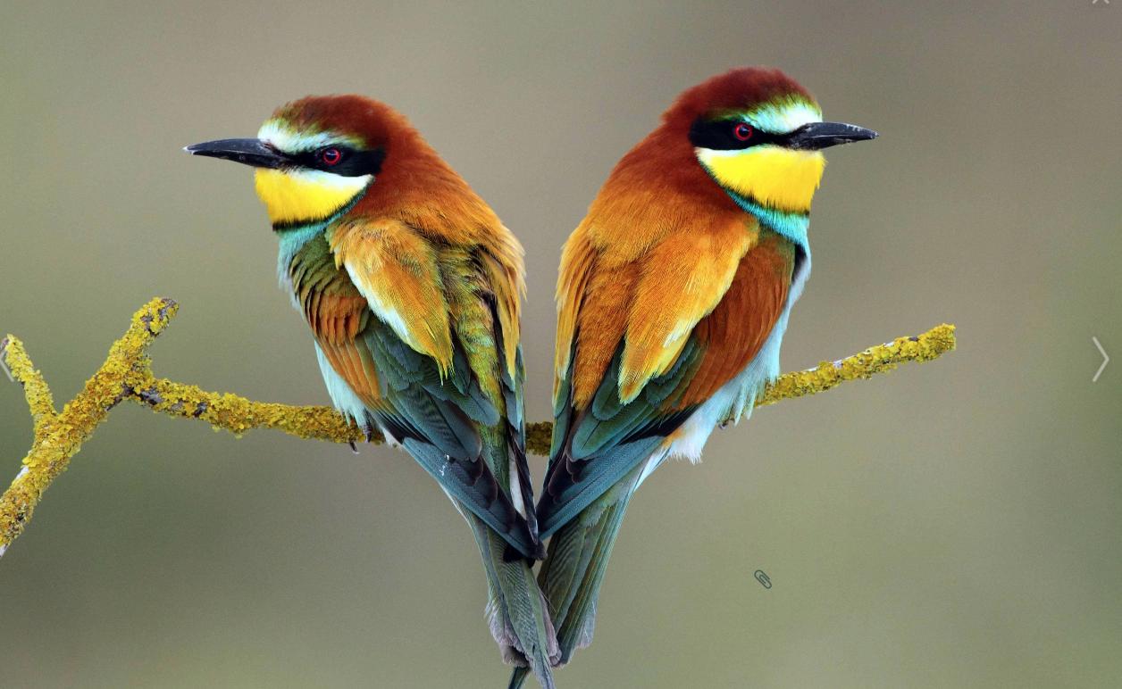 Выставка птиц «Птички врукавичке» 2016