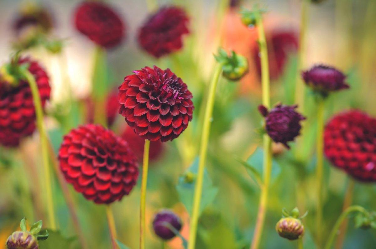 Цветочная выставка «Краски лета» вБотаническом саду 2017