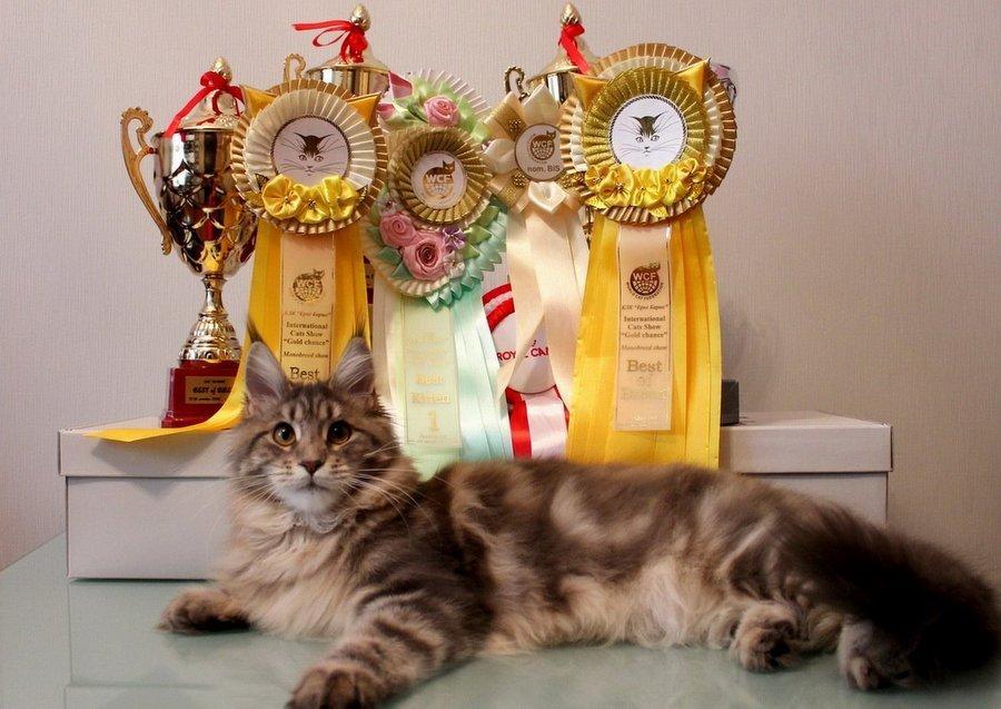 Выставка «Мир Кошек» 2017