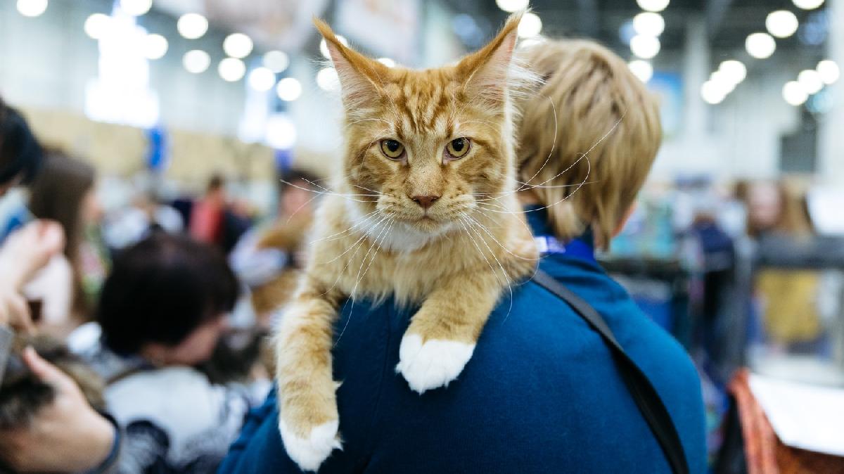 Выставка «Мир кошек— 2021»