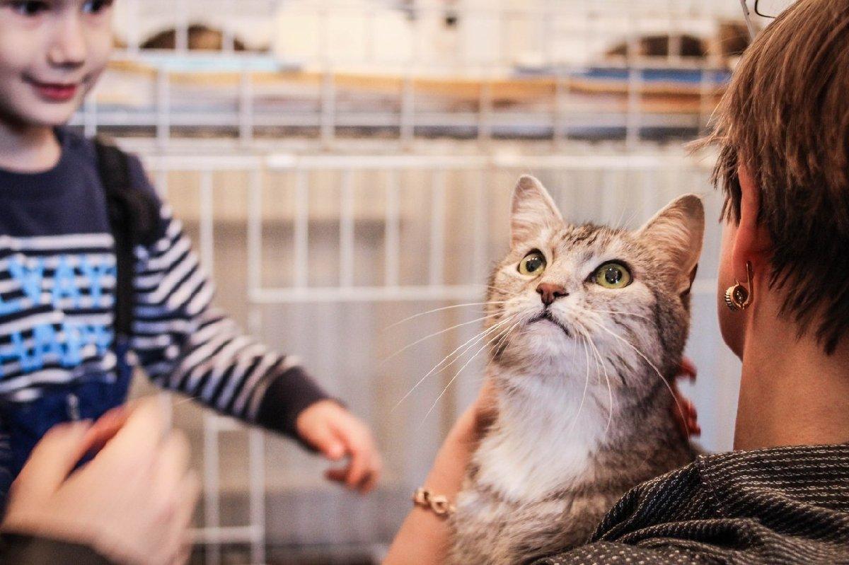 Выставка-раздача кошек «Новогоднее чудо»