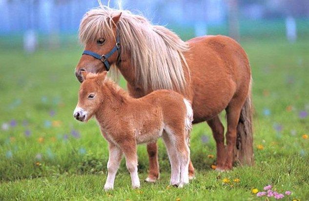 Фестиваль «Пони»