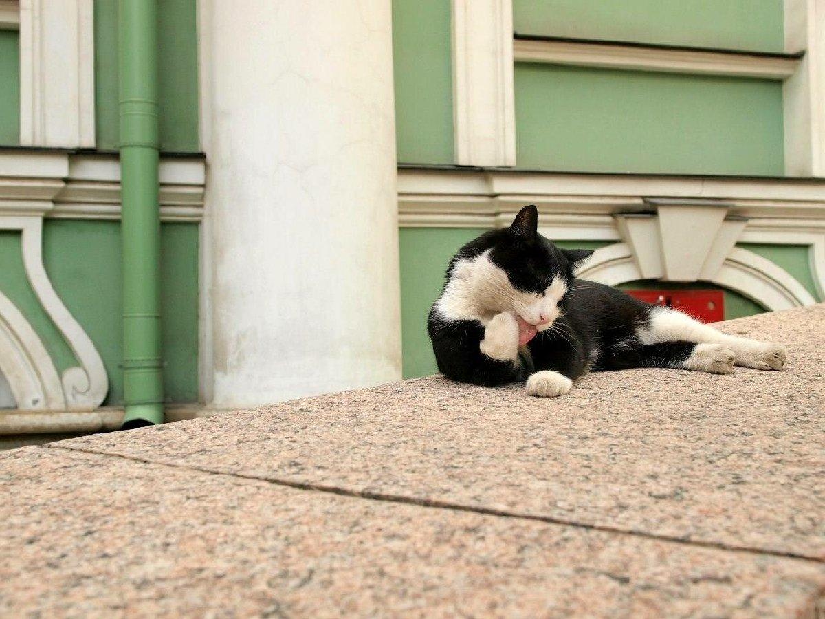 георгиевская эрмитажный кот фото местом летнего пляжного