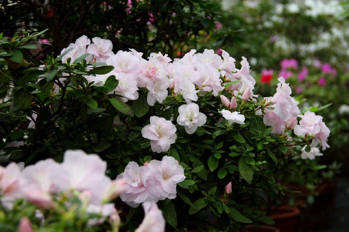 Сад Света. Романтическое свидание