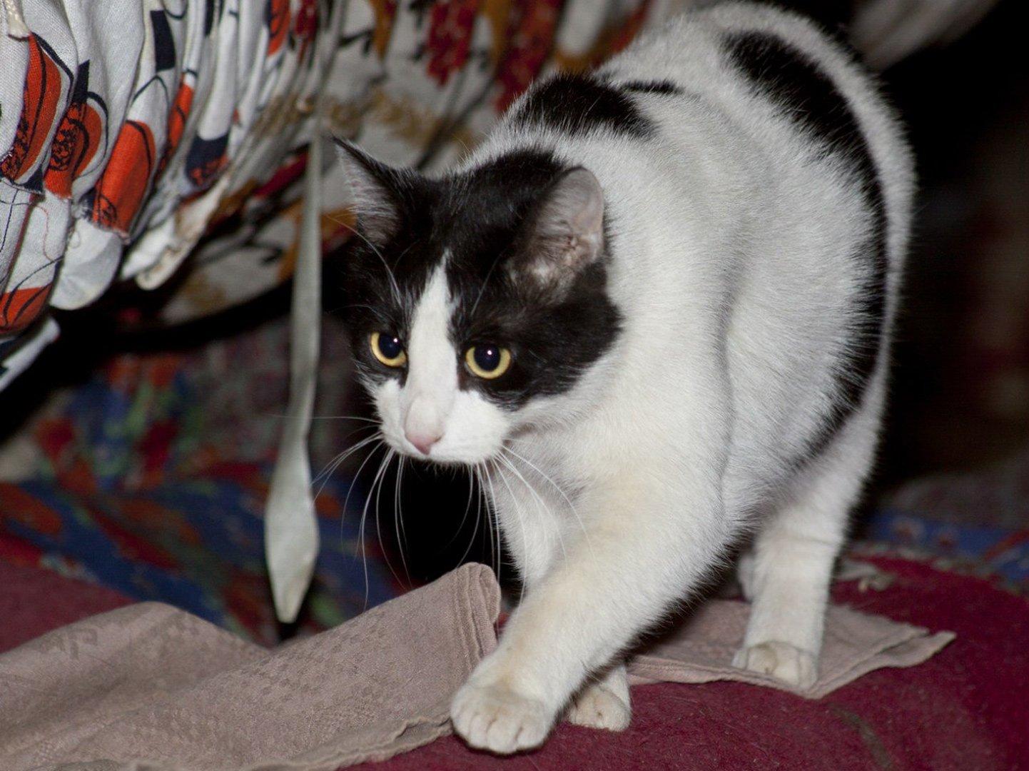 День «Эрмитажного кота»