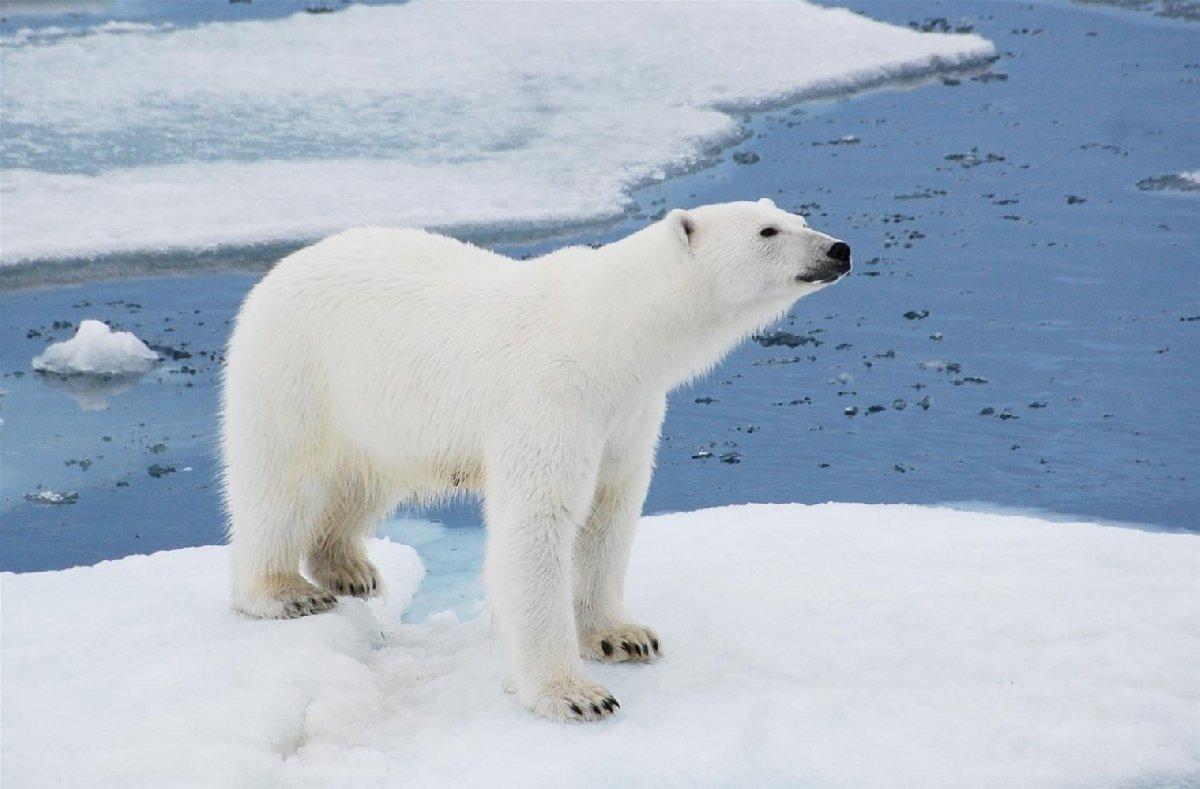 День белого медведя вЛенинградском зоопарке 2018