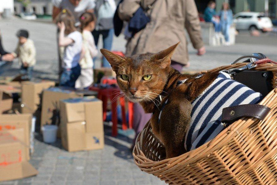 Всемирный день Петербургских котов 2019