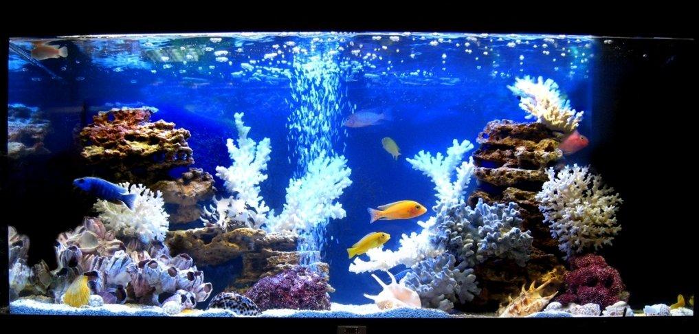 Вставка карпозубых рыб ибиотопных аквариумов 2017