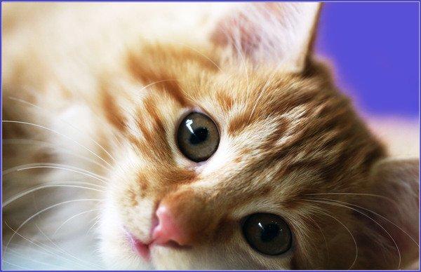 Фотовыставка «Котоостровок»