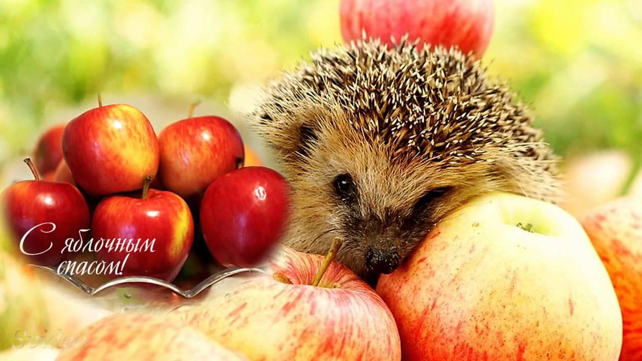 фото яблочного спаса