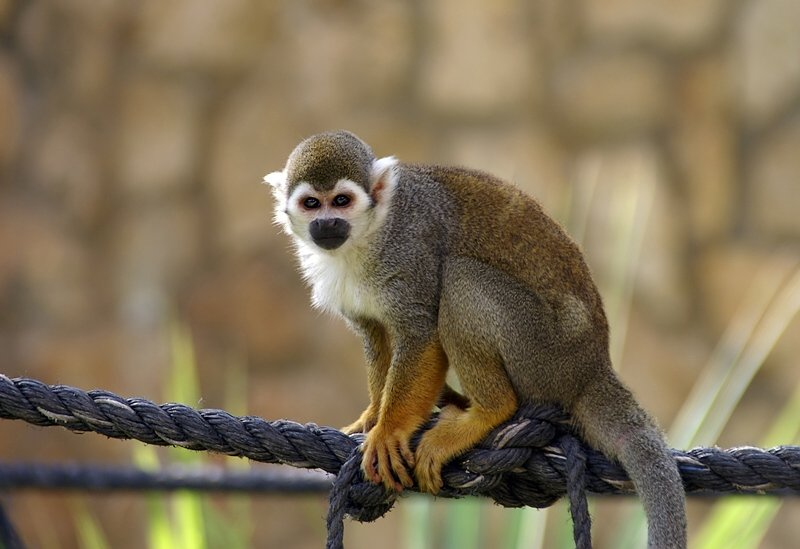 Международный день обезьян вЛенинградском зоопарке 2017