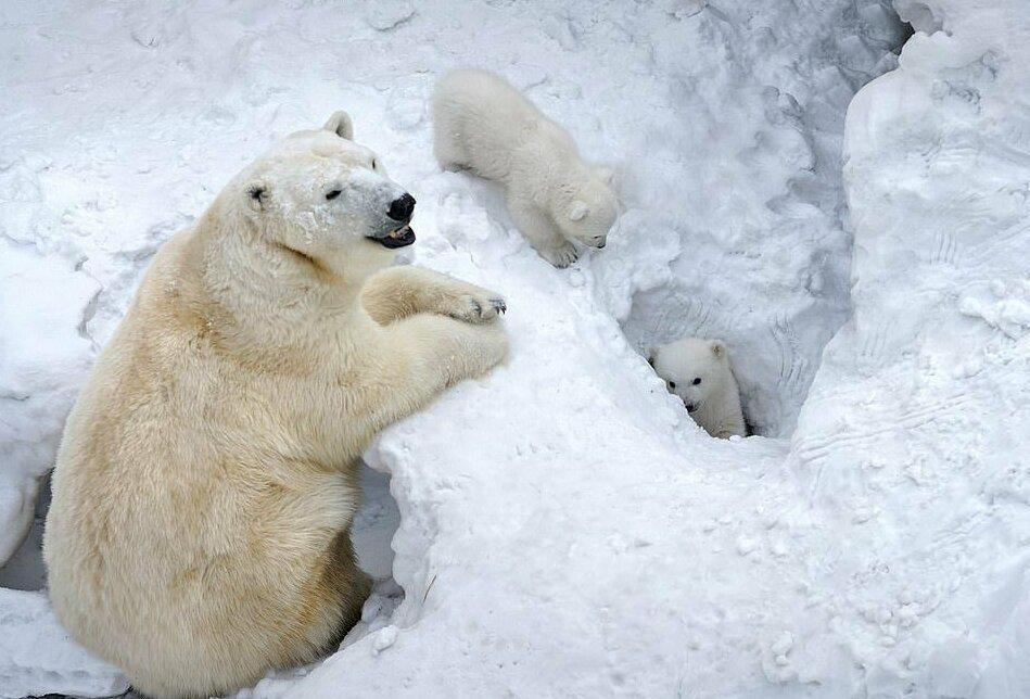 День Белого медведя наледоколе Красин 2020