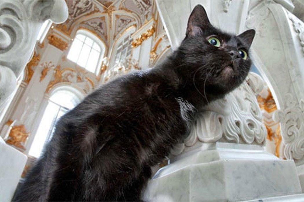 эрмитажный кот фото работа