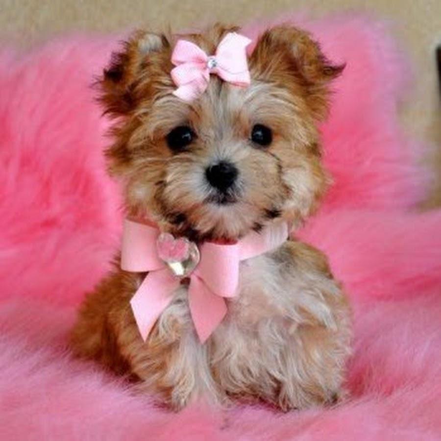 Картинка маленьких собачек