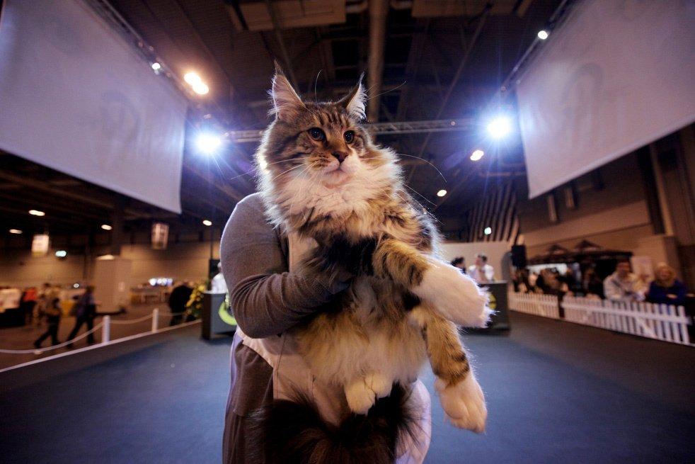 Выставка «Мир кошек» 2016