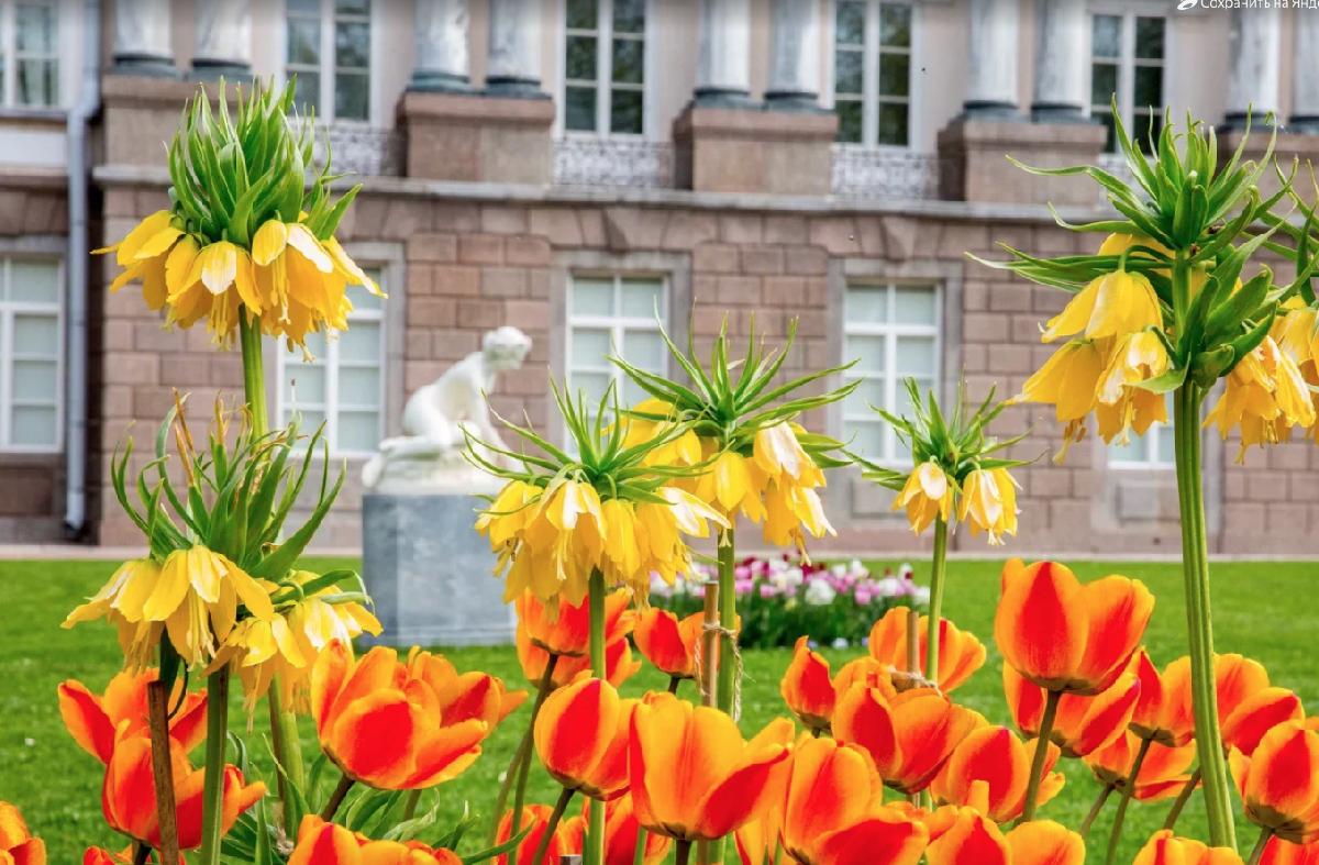 Топ-10 интересных событий вСанкт-Петербурге навыходные 18 и19 мая 2019