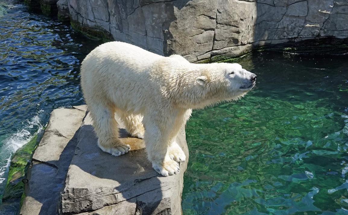 Международный День белого медведя вЛенинградском зоопарке 2019