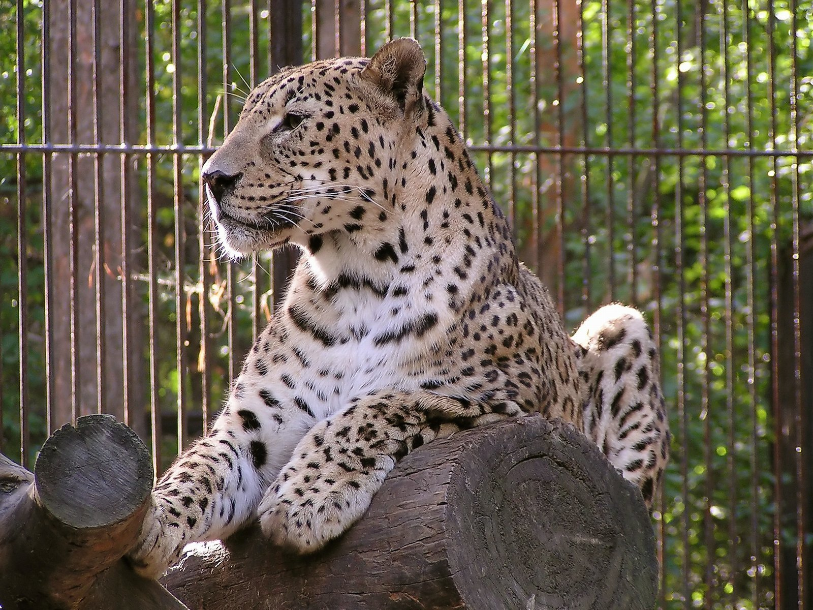 Часы стоимость в работы спб зоопарк часы продать карманные