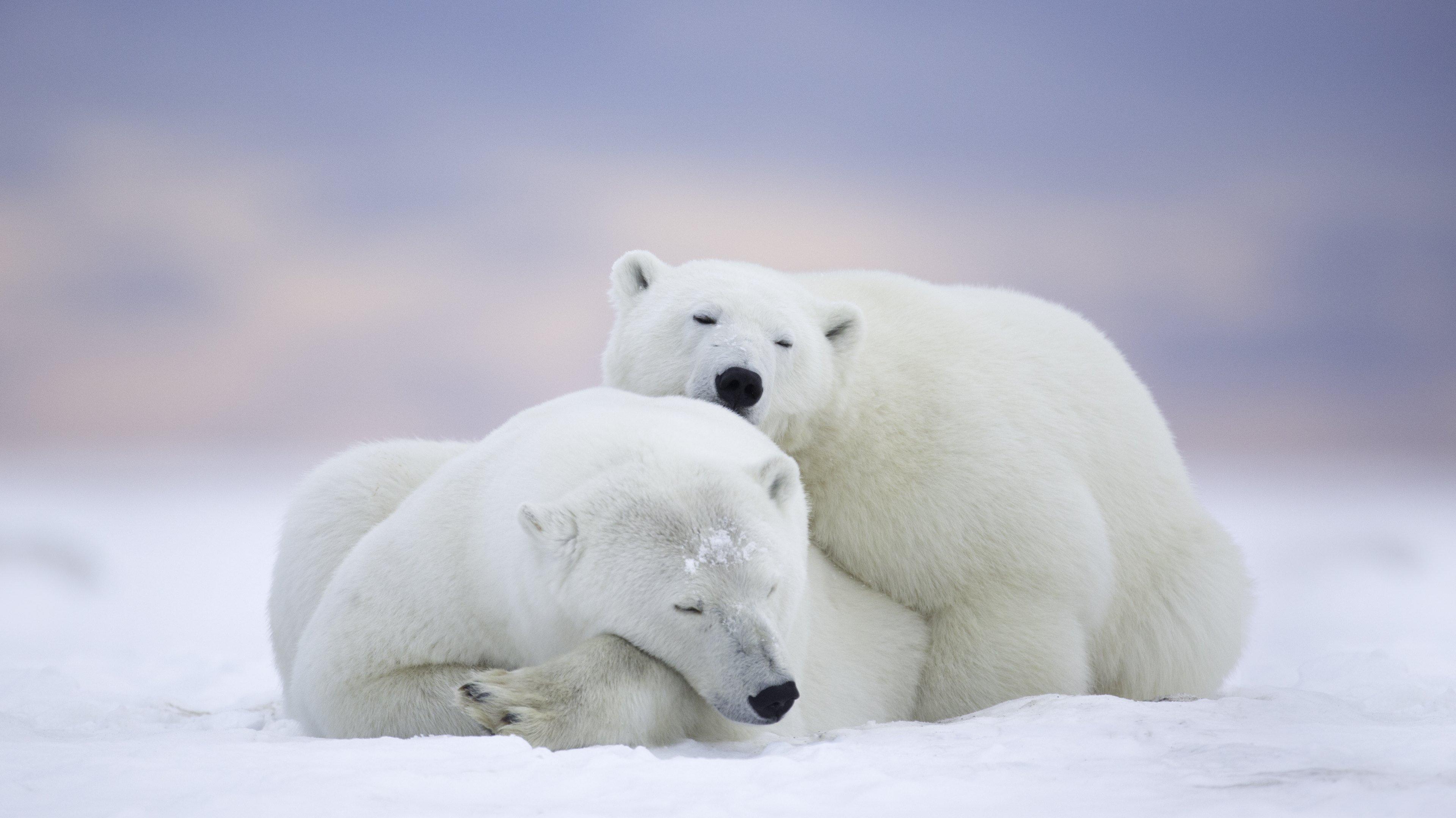 Белый медведь 2 13 фотография