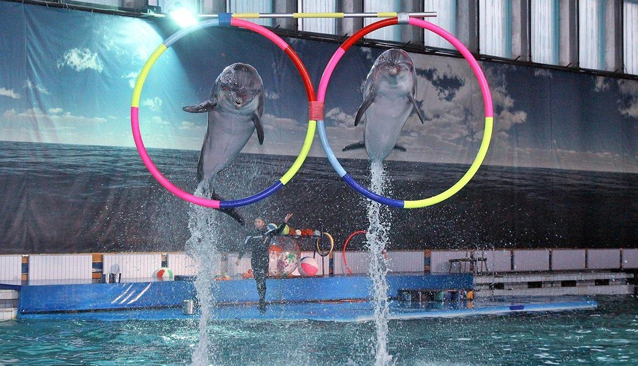 Картинки по запросу санкт-петербург дельфинарий